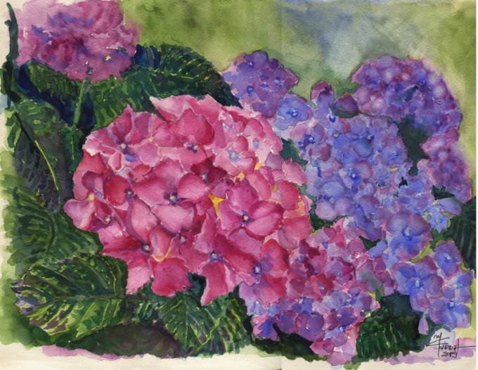 Hydrangeas- Watercolour Painting- Artist Marialena Sarris- © 24-6-2015