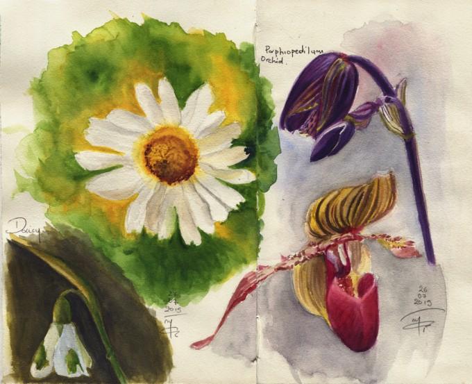 Florals Sketchbook Pages- Watercolour Sketches- Artist Marialena Sarris - © 7- 2015