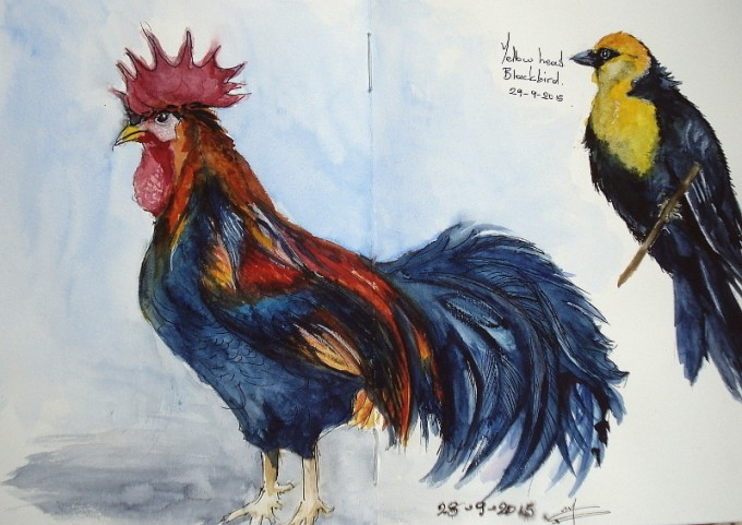 The Rooster and the Blackbird- Watercolour Sketches- Artist Marialena Sarris - © 9-2015
