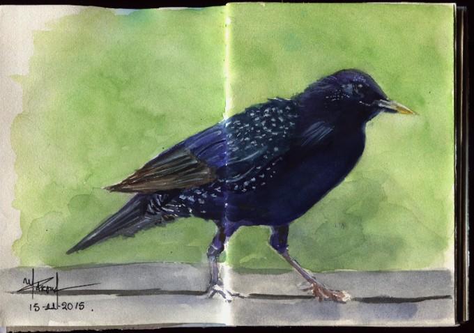 Crow - Watercolour Sketch- Artist Marialena Sarris- © 11-2015