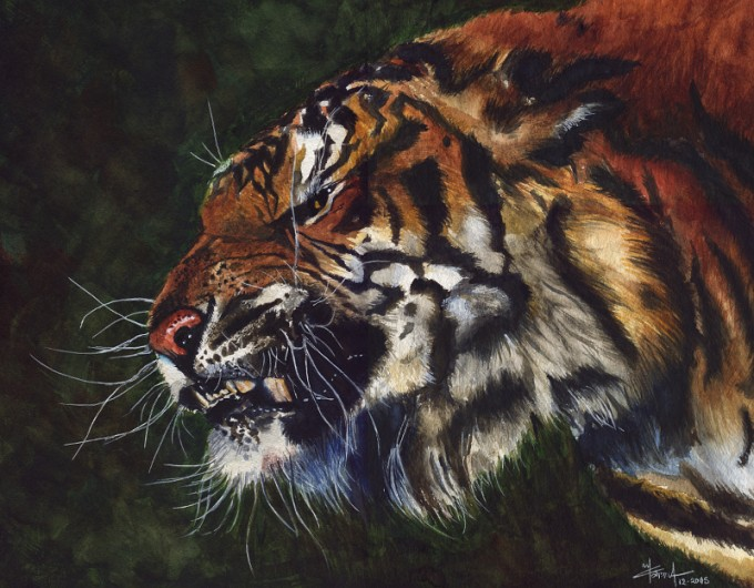 Angry Tiiger- Watercolour Painting- Artist Marialena Sarris- © 18-12-2015