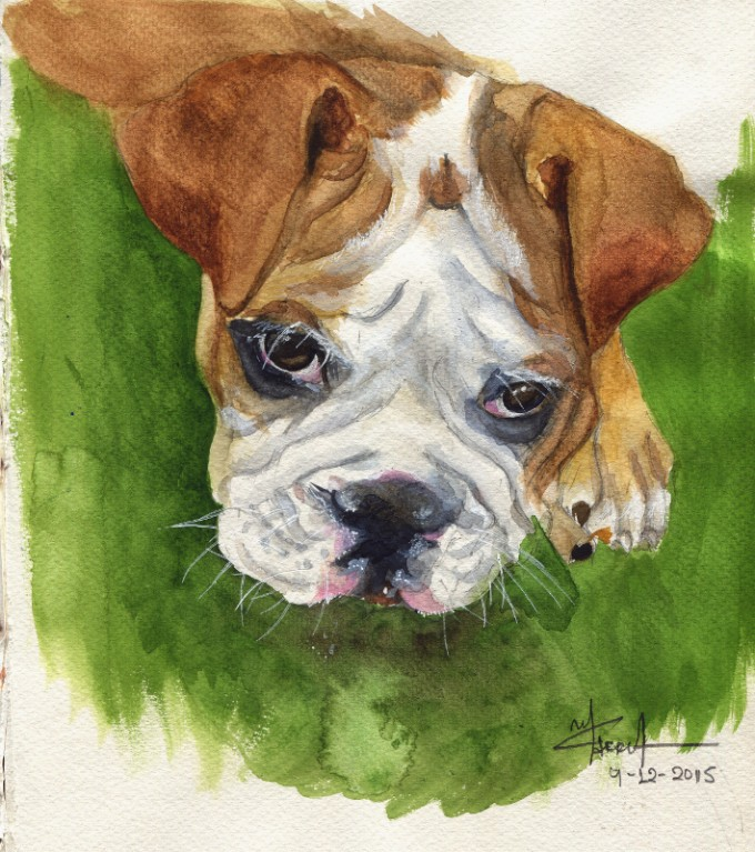 Bulldog Puppy- Watercolour Sketch- Artist Marialena Sarris- ©12-2015