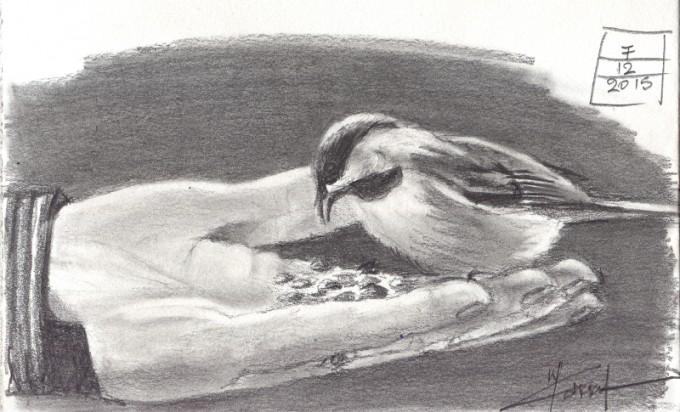 Feeding Bird- Graphite Sketch- Artist Marialena Sarris- © 12-2015