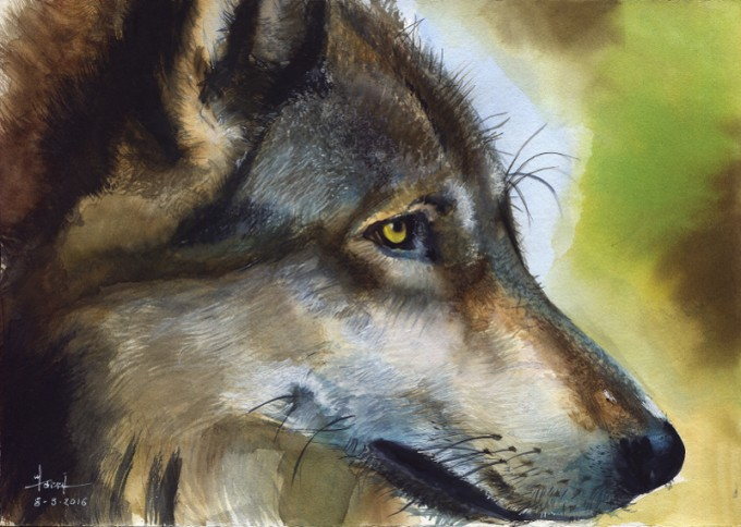 Wolf Wolf - Watercolour Painting- Artist Marialena Sarris- © 8-3-2016