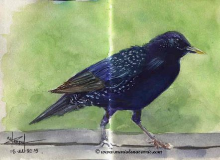 Crow-Watercolour-Sketch-Artist-Marialena-Sarris-©2015