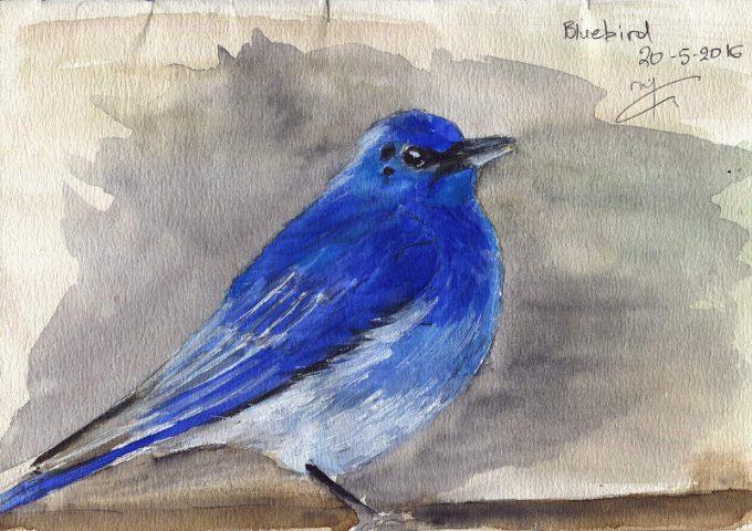 Ornithology - Page 1 - Watercolour Wildlife Bird Sketch- Artist Marialena Sarris- © 20-5-2016