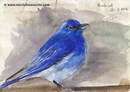 Ornithology - Page 1 - Watercolour Wildlife Bird Sketch- Artist Marialena Sarris- 20-5-2016