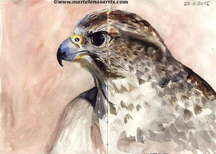Ornithology- Pages 10-11- Watercolour Wildlife Bird Sketches- Artist Marialena Sarris- 5-2016