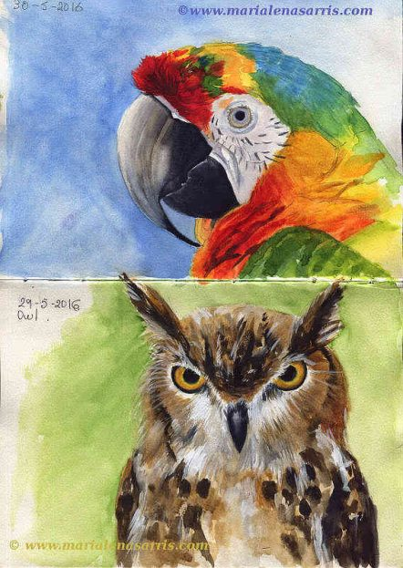 Ornithology- Pages 12-13- Watercolour Wildlife Birds Sketches- Artist Marialena Sarris- 5-2016