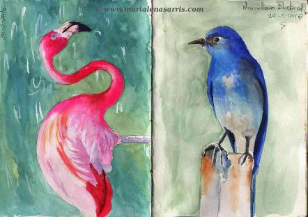 Ornithology-Pages 18-19- Watercolour Wildlife Birds Sketches- Artist Marialena Sarris- 5-2016