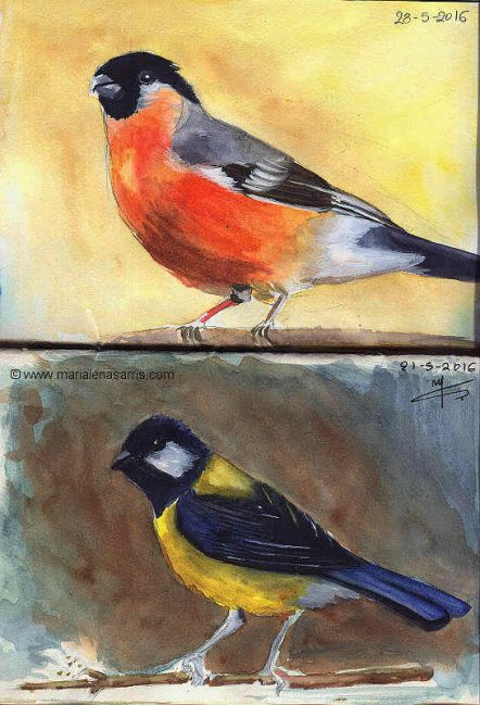 Ornithology Sketchbook- Pages 2-3 -Watercolour Wildilife Birds Sketches- Artist Marialena Sarris- 5-2016