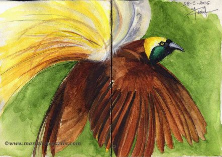 Ornithology-Pages 22-23- Watercolour Wildlife Birds Sketch- Artist Marialena Sarris- 5-2016