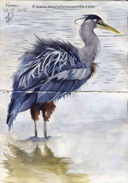 Ornithology-Pages 24-25- Watercolour Wildlife Birds Sketch- Artist Marialena Sarris- 5-2016