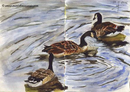 Ornithology-Pages 26-27-Watercolour Wildlife Birds Sketch- Artist Marialena Sarris- 5-2016