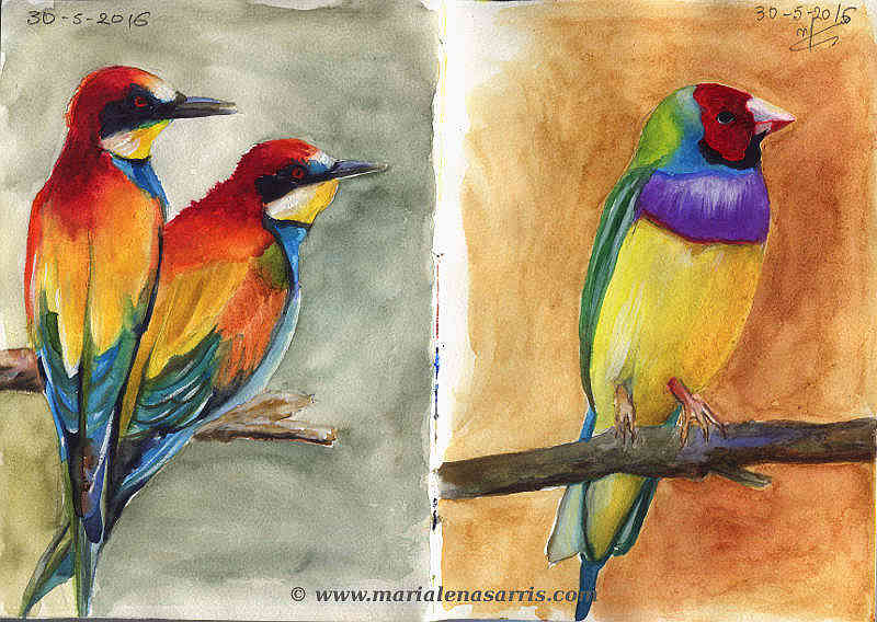 Ornithology-Pages 28-29- Watercolour Wildlife Birds Sketch- Artist Marialena Sarris- 5-2016
