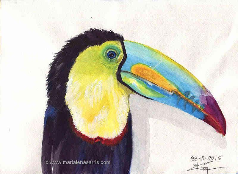 Ornithology-Pages 30- Watercolour Wildlife Bird Sketch- Artist Marialena Sarris-5-2016