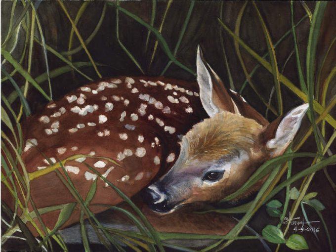 The Little Deer-Watercolour Wild LIfe Painting- Artist Marialena Sarris - © 4-5-2016