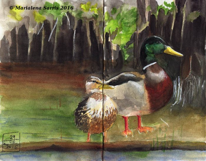 Ducks- Watercolour Sketch - Kuretake Tambi Gansai Review- Artist Marialena Sarris- © 6-2016