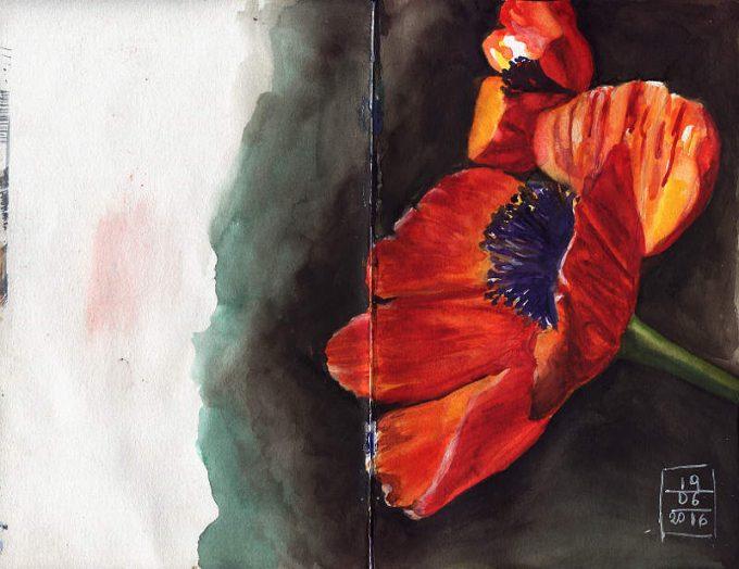 Poppy 2- Watercolour Sketch- Artist Marialena Sarris- © 6-2016