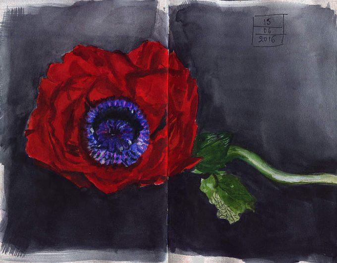 Poppy- Watercolour Sketch- Artist Marialena Sarris- © 6-2016