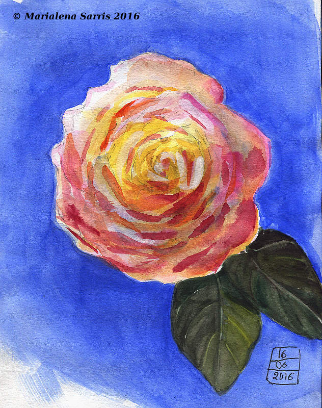 A rose- Watercolour Sketch made for Fabriano Venezia Sketchbook Review- Artist Marialena Sarris- 6-2016