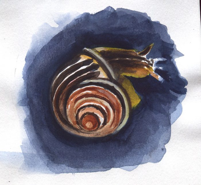 Failed Snail Sketch due to buckling