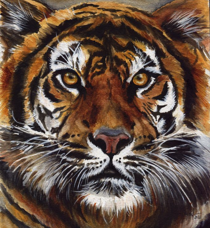 Tiger- Watercolour Wild Life Painting- Artist Marialena Sarris - ©30-9-2016