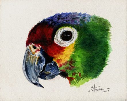 Parrot- Watercolour Wild Life Painting- Artist Marialena Sarris - © 3-3-2017- SOLD