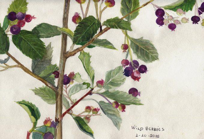 Wild Berries, Watercolour Botanical Sketch- Artist Marialena Sarris- © 1-10-2015