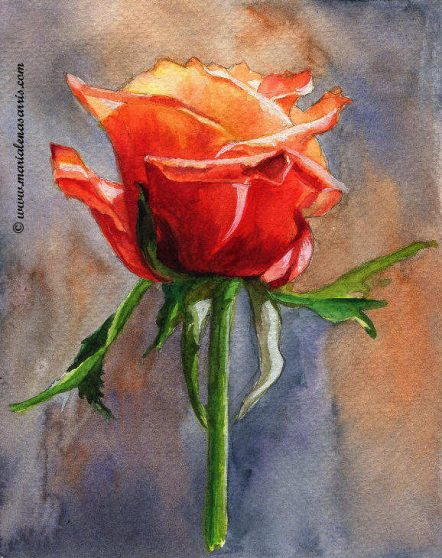 A Red Orange Rose Study-FOR SALE