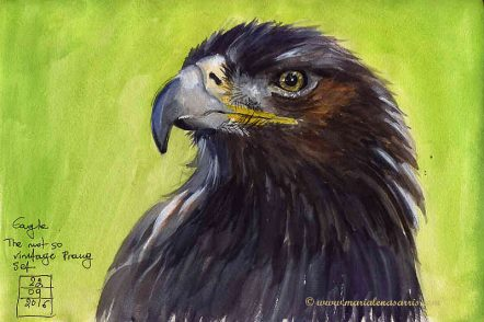 An Eagle- Watercolour Sketch- Artist Marialena Sarris - © 22-9-2016