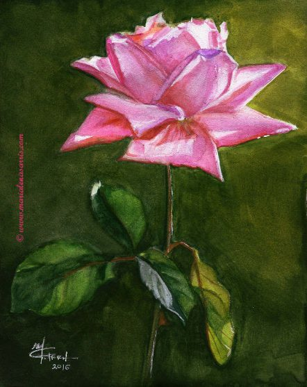 Pink Rose- Watercolor on A4 paper-Price 100 euros
