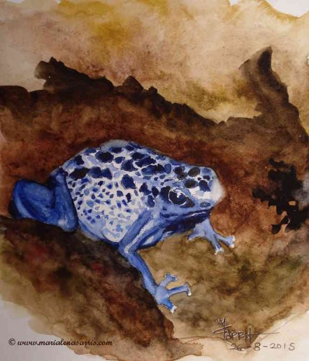 Blue Frog II- Watercolor Sketch- Artist Marialena Sarris- August 2015