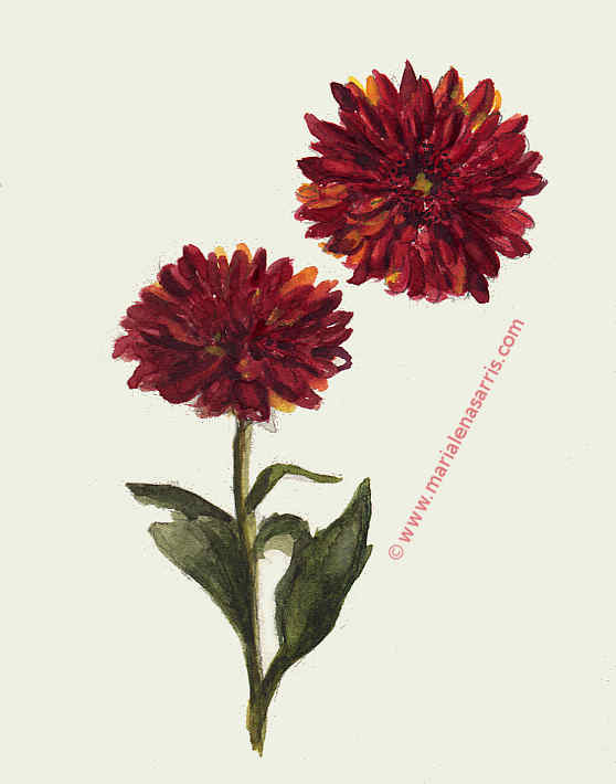 Chrysanthemum flower- Watercolour Sketch- Artist Marialena Sarris- © 2017