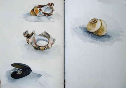 Shells Collection- Watercolour Shells sketches - © Artist Marialena Sarris 2015