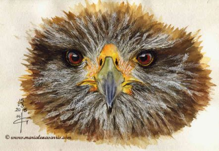 Eagle- Watercolor Sketch- Marialena Sarris- 2015