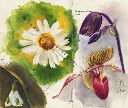 Florals Sketchbook Pages- Watercolour Sketches- Artist Marialena Sarris - © 7- 2015