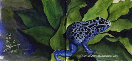 Froggy- Watercolour Sketch- Artist Marialena Sarris- © 5- 2015