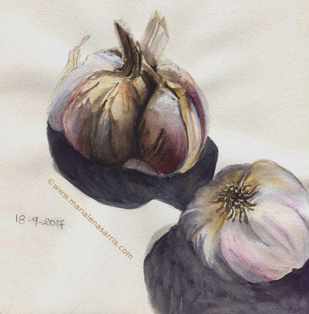 Garlic- Watercolour Sketch- Artist Marialena Sarris- © 8-9-2017