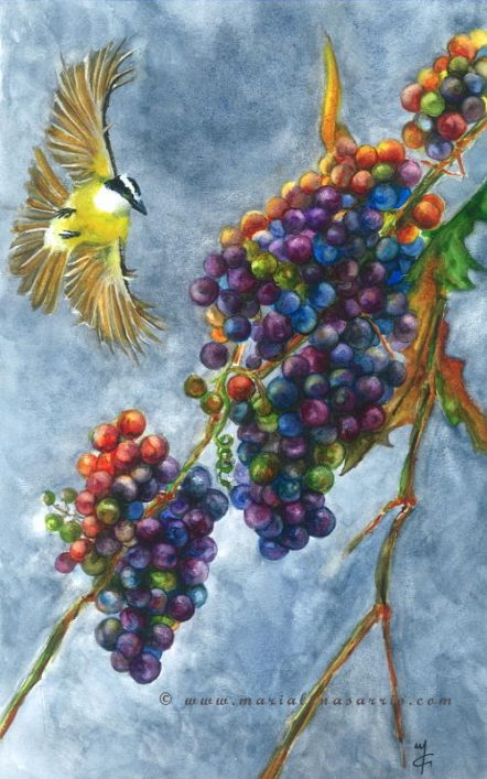 Grapes-Watercolour Painting with Grapes- ©Marialena Sarris 2015