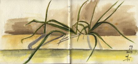 Grass- Watercolour Botanical Sketch- Artist Marialena Sarris- © 1-4-2015