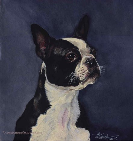 Hawaii II- Watercolour Pet Portrait- Artist Marialena Sarris- © 7- 2015- SOLD