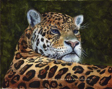 Jaguar- Jaguar Watercolour Painting-© Artist Marialena Sarris -11-2015