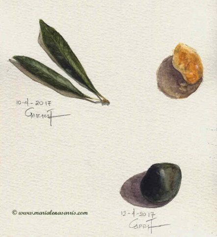 Little rocks and an olive leaf- Watercolour sketch- Artist Marialena Sarris -© 2017