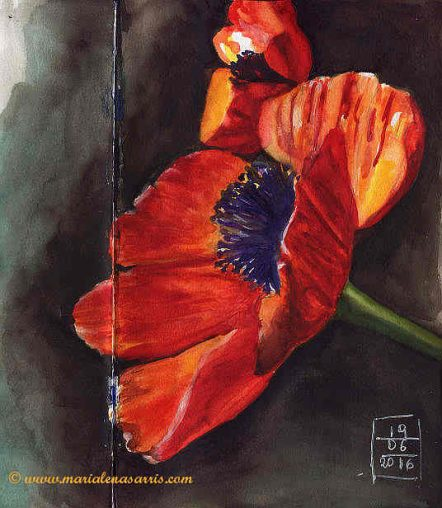 Poppy 2- Watercolour Sketch- Artist Marialena Sarris- © 6-2016