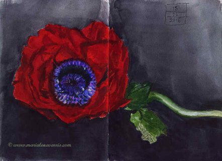 Poppy- Watercolour Sketch- Artist Marialena Sarris- © 6-2016