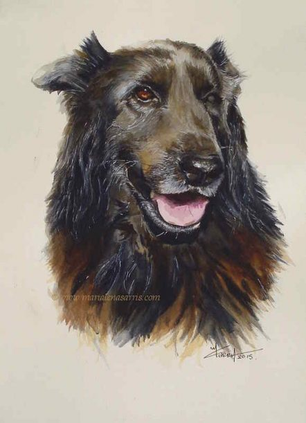 Regal Rigel- Watercolour Pet Portrait- Artist Marielna Sarris - 2015