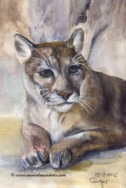 The Cougar- Watercolour Sketch - Artist Marialena Sarris