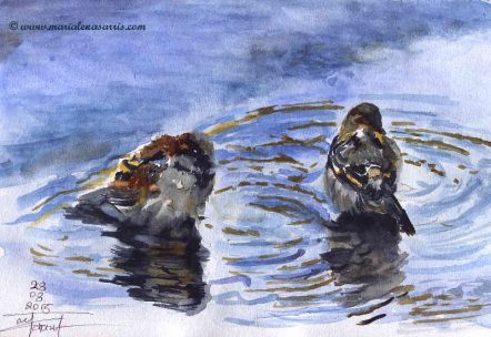 The-Sparrows-Watercolour-Sketch-Artist-Marialena-Sarris-August-2015