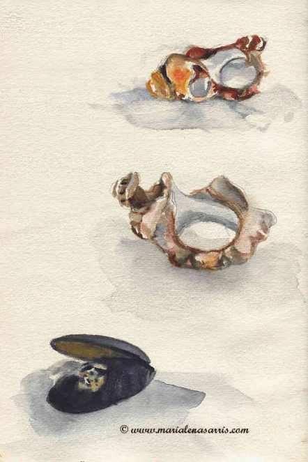 Tiny Shells Collection 2- Watercolour Sketches - Artist Marialena Sarris - © August 2015